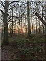 TF0820 : Another sunrise by Bob Harvey