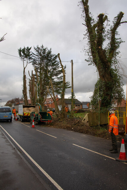 Tree cutting at Crowdhill