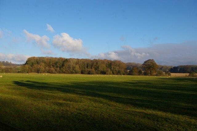 Sheep pasture north of Cottesbrooke