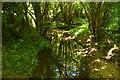 TQ6128 : Tide Brook by N Chadwick