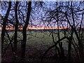 TF0820 : Morning gold by Bob Harvey
