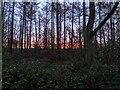 TF0820 : The edge of the woods by Bob Harvey
