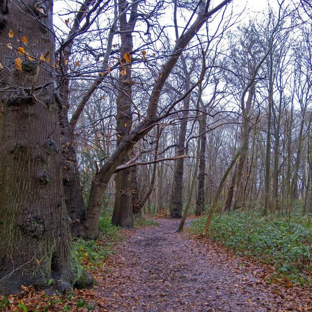 Path in Ashenbank Wood, Cobham