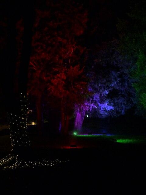 Tring - Memorial Gardens - Illuminated trees for Christmas