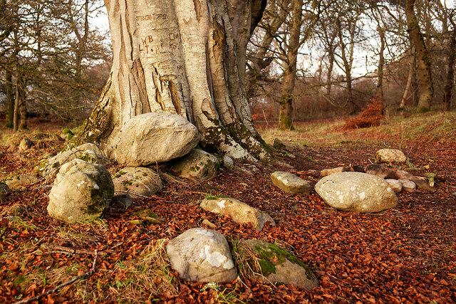 Under a very large beech tree, Drummondreach Oak Wood