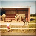 SJ4693 : Elephants at Knowsley by Gerald England