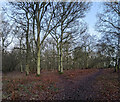 TF0821 : Woodland in winter by Bob Harvey