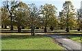 TQ1569 : Chestnut Trees by N Chadwick