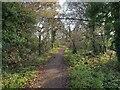 TL0709 : Hemel Hempstead: Green lane near Cupid Green Lane by Nigel Cox