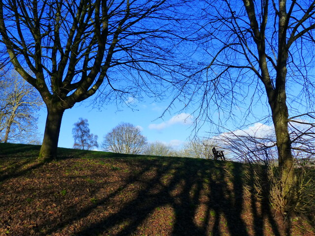 Winter trees and shadows, Piggy's Hill, Chepstow
