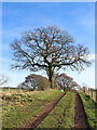 SO9195 : Farm track and oak trees near Goldthorn Park, Wolverhampton by Roger  Kidd