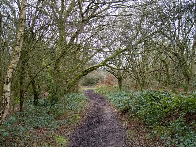 Footpath through the trees, Danbury Common