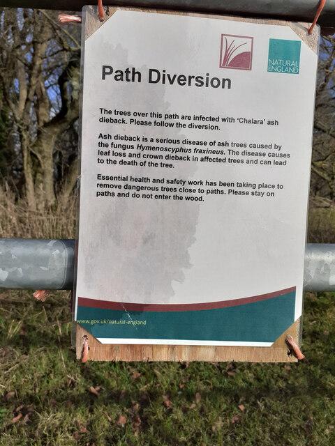 Ash dieback warning notice on Beacon Hill