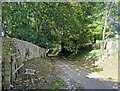 TV5598 : Road in Friston Forest with Footpath Crossing by PAUL FARMER