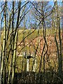 SK6039 : Colwick Cutting cliffs – 2 by Alan Murray-Rust
