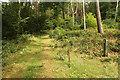 SK8865 : Path through Tunman Wood by Richard Croft