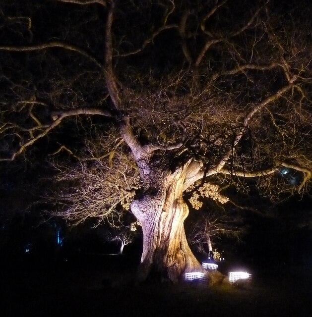 Blenheim Illuminations - (13) - Illuminated Oak
