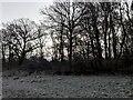 TF0820 : Trees and Freeze by Bob Harvey