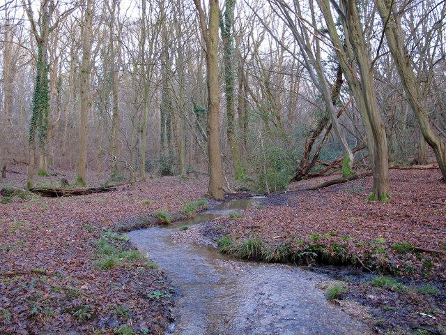 Stream between Birch Wood and Woodham Walter Common
