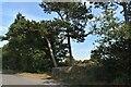 TM1941 : Pill box and pine shelter belt by Simon Mortimer