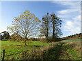 SU9747 : Loseley Park by Colin Smith