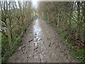TQ5336 : Muddy footpath near Groombridge by Marathon