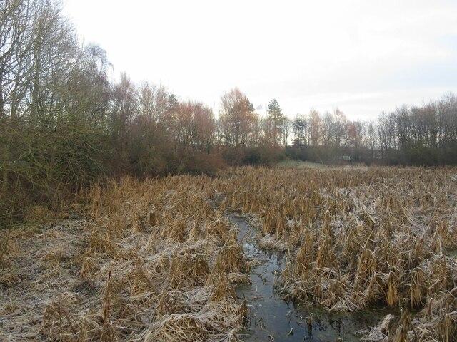 Frozen eastern end of Stenton Pond, Thornton