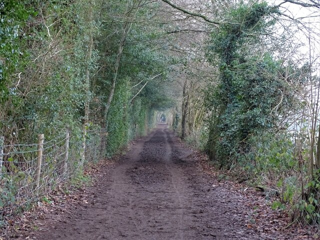 Path through Worthlodge Forest