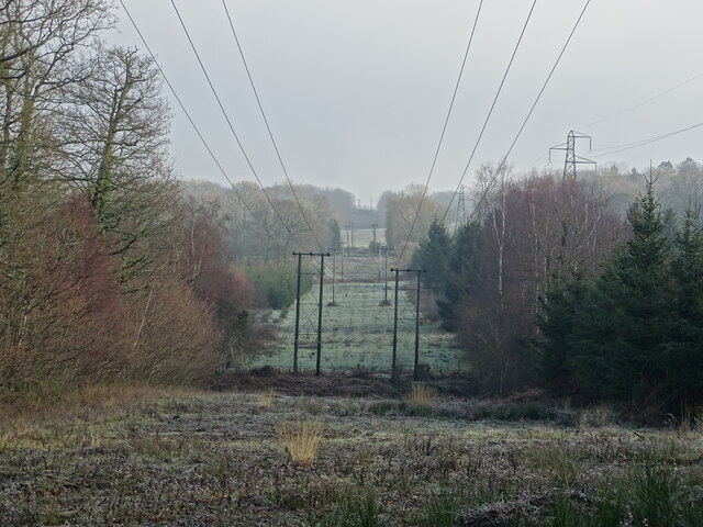 Power wires through Worthlodge Forest