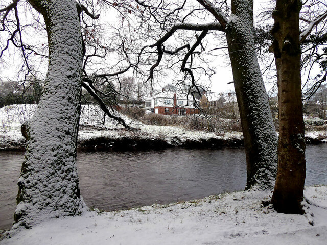 A dusting of snow on trees, Cranny