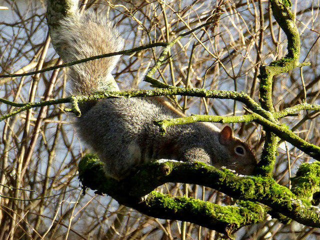 Squirrel, Cranny