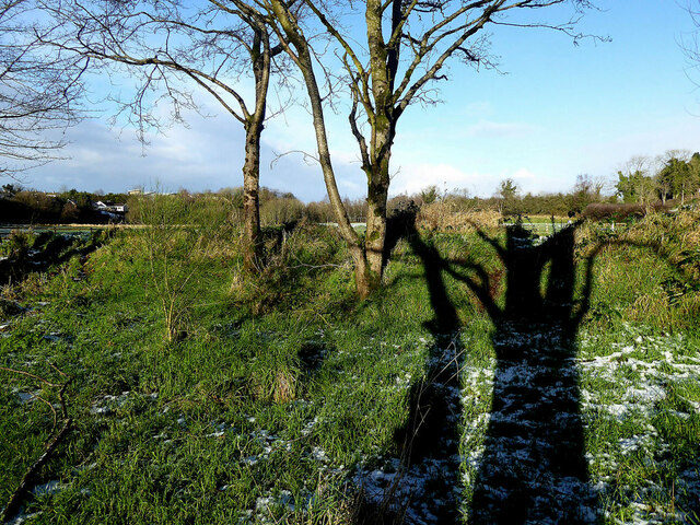 Tree shadows, Mullaghmore