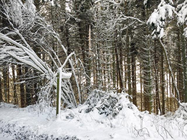 Footpath to Studdon Dene in the snow