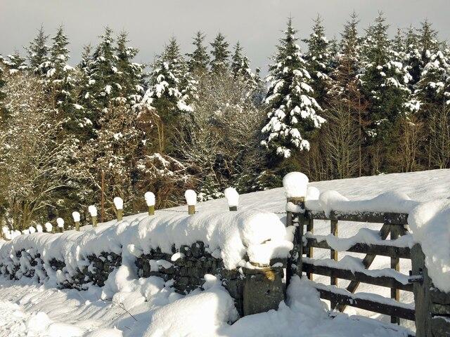 Snow sculptures on fence posts near Parkgates