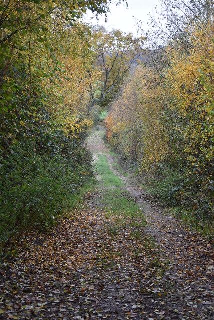 Autumnal footpath by N Chadwick