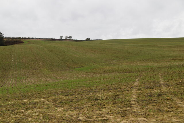 A young crop near Mouseden by N Chadwick
