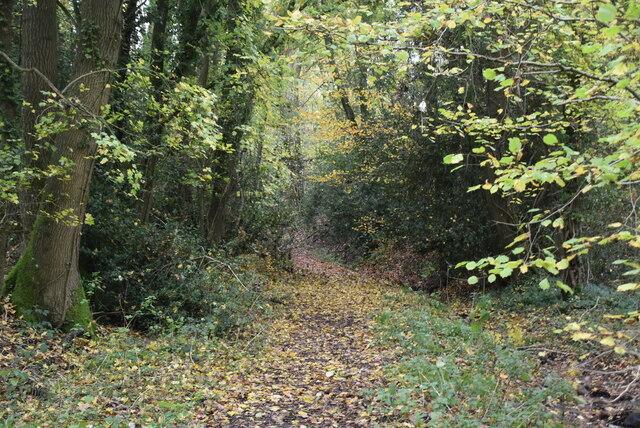 Footpath to Cornford Lane by N Chadwick