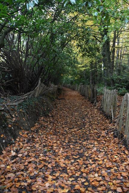 Footpath to Pembury Rd