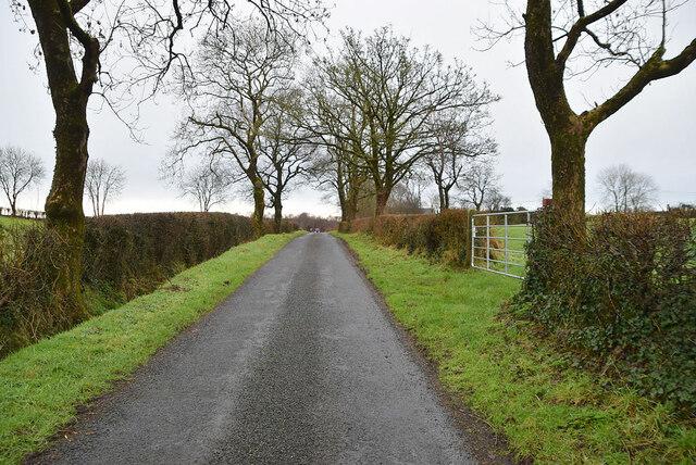 Trees along Cranmore Road