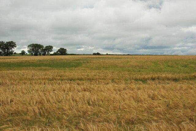 Arable field at Prospect Farm