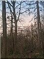 TF0820 : A one-sided Oak by Bob Harvey