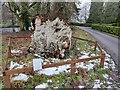 SO8774 : Elm tree stump at Harvington Hall by Mat Fascione