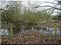 TG3326 : Flooded scrub woodland by David Pashley