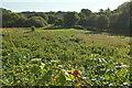 SX8659 : Meadow by Yalberton Stream by Derek Harper