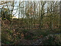 TG3129 : Scrub woodland beside driveway to River Farm by David Pashley