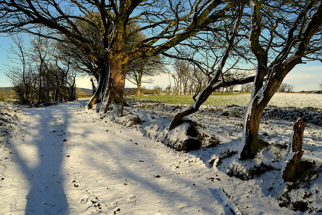 Snow covered lane and shadows, Racolpa
