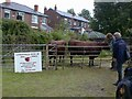 SJ9593 : Longdendale Herd of Red Polls by Gerald England