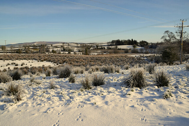 Snow among the rushes, Fireagh