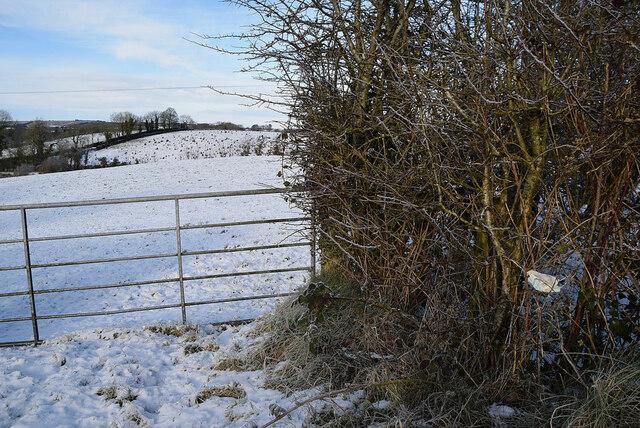 Gate along Loughmuck Road