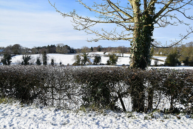 Frosty hedge, Creevangar